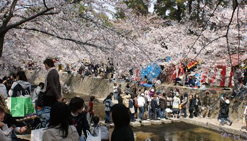 hanami2009-1.jpg